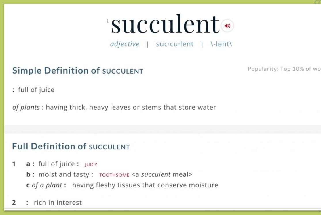 succulent8